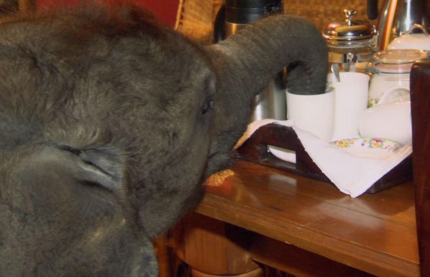 male slonica (5)