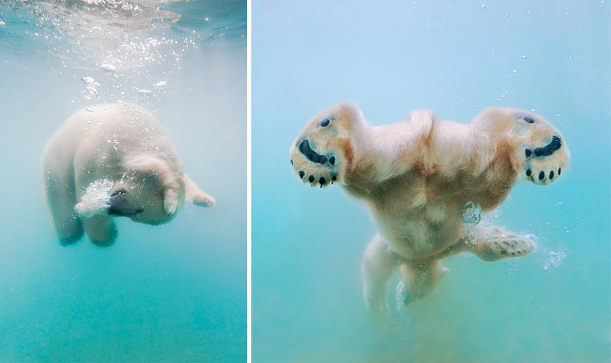 maly polarny medvedik (6)