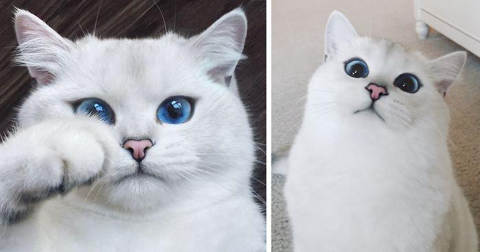 najúžasnejšie mačacie oči (15)