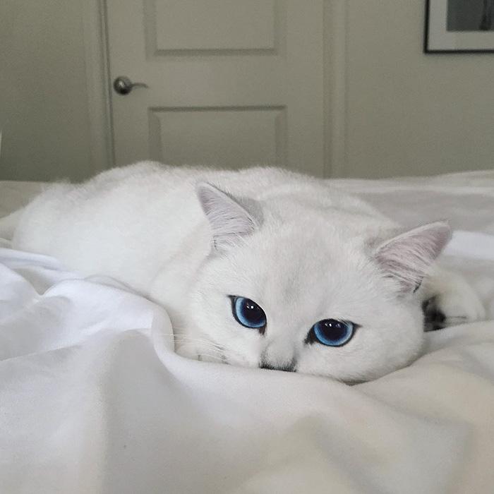 najúžasnejšie mačacie oči (6)