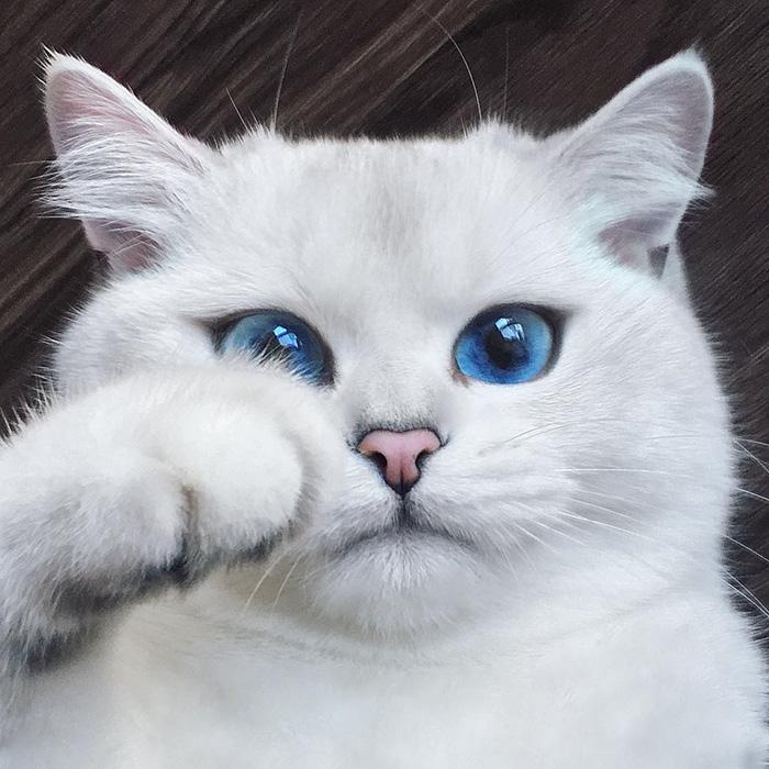 najúžasnejšie mačacie oči (9)
