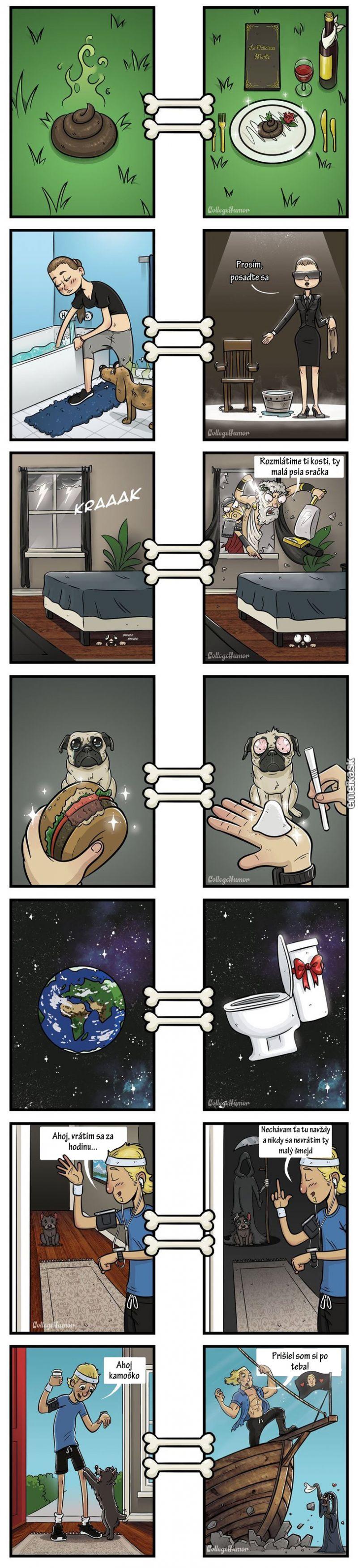 čo vidí pes
