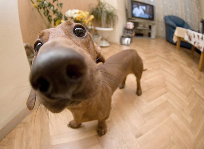 psie nufaky (4)