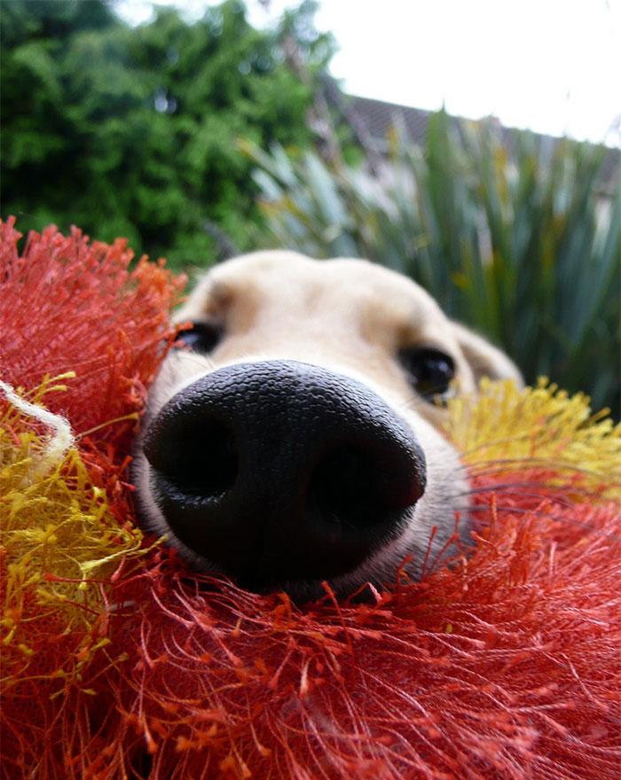 psie nufaky (7)