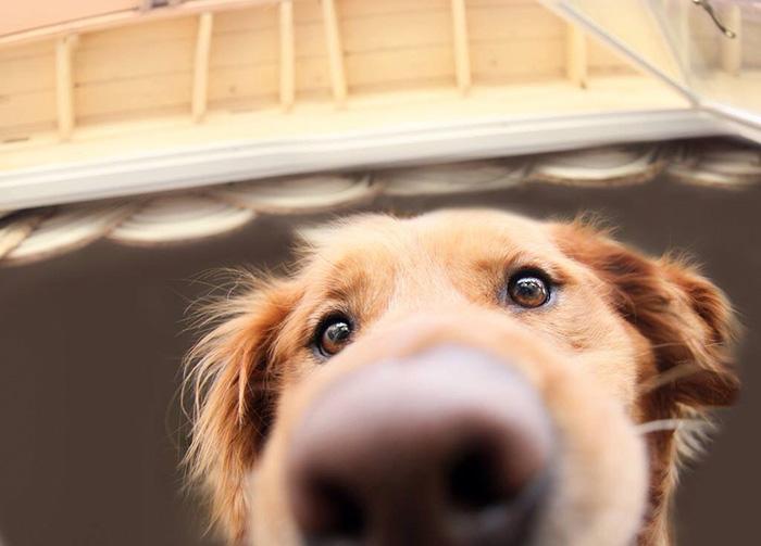 psie nufaky (8)
