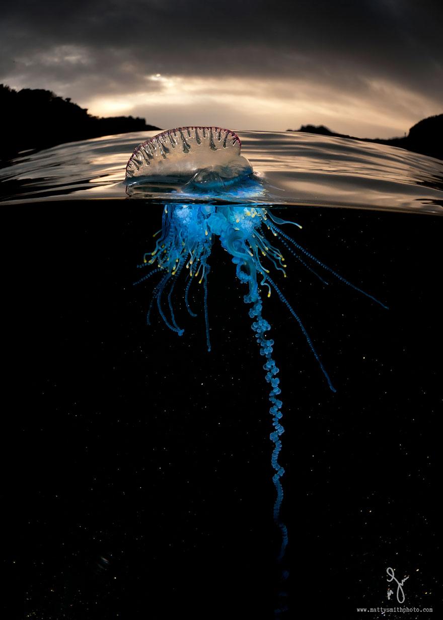 pod oceanom (1)