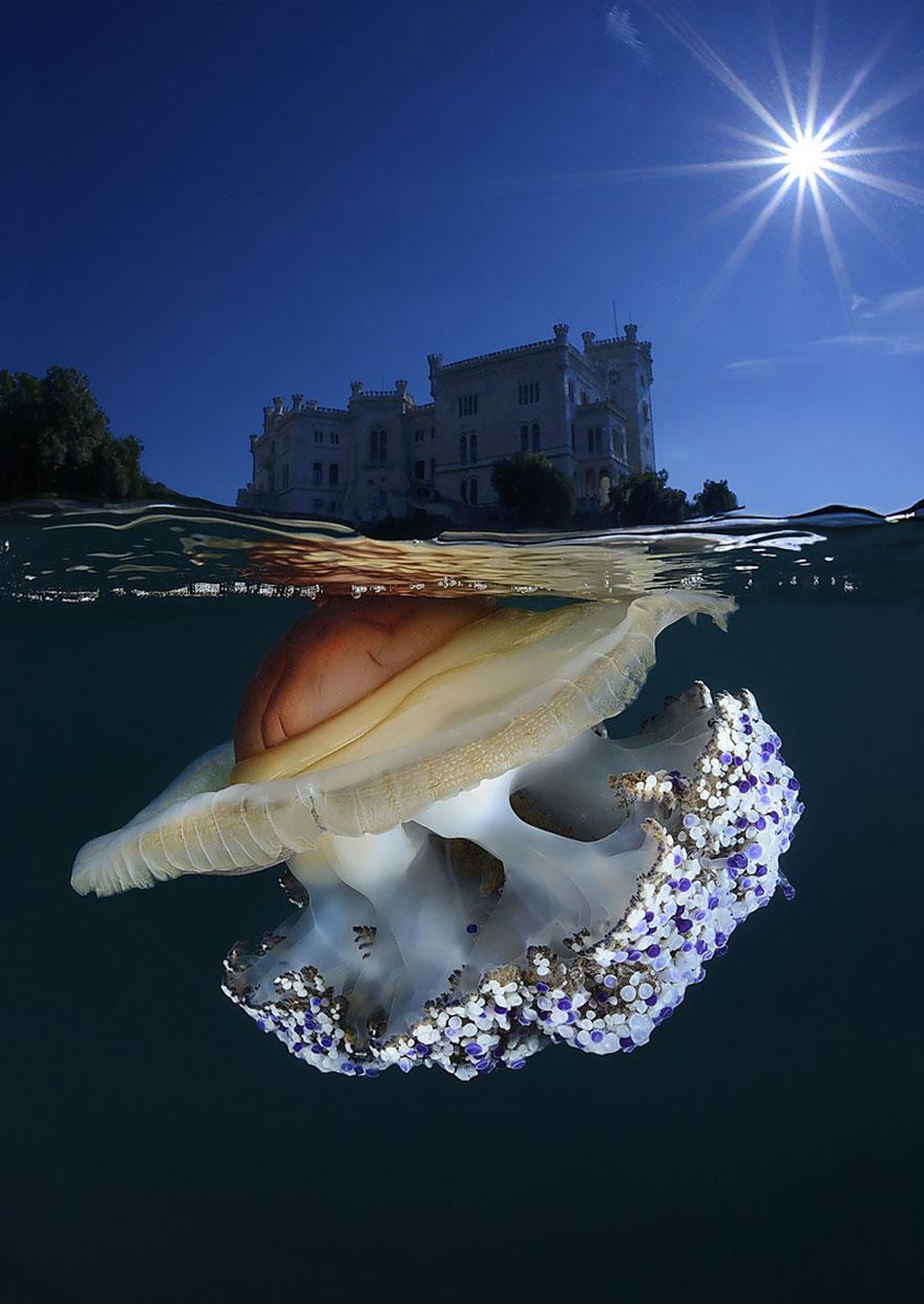 svet nad a pod morom (11)