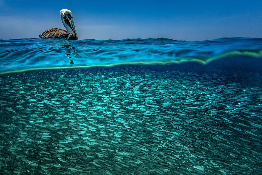 pod oceanom (13)