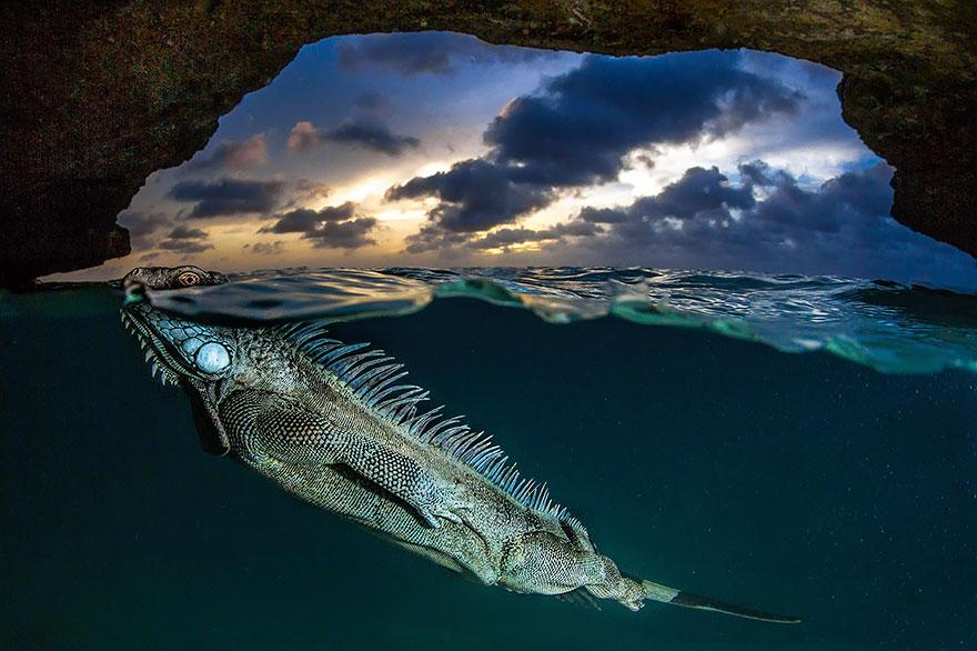 svet nad a pod morom (4)