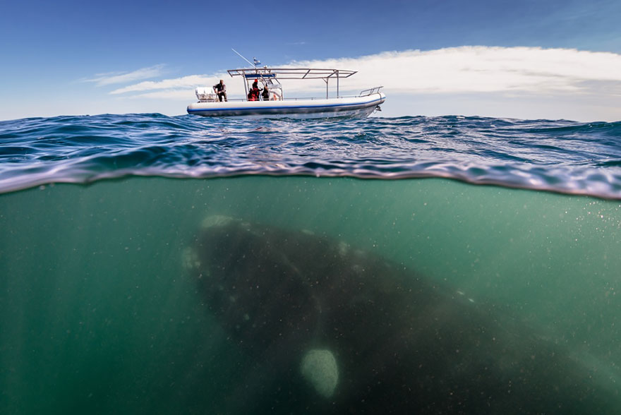pod oceanom(8)