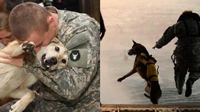 vojaci a psy (3)