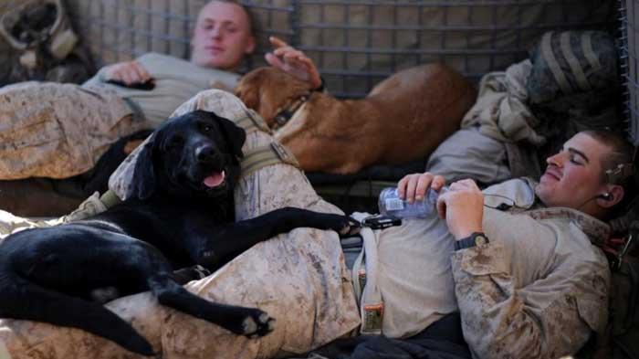 vojaci a psy (4)