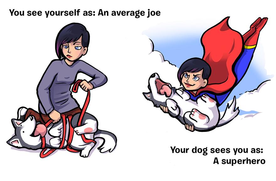 ako ta vidi pes (3)