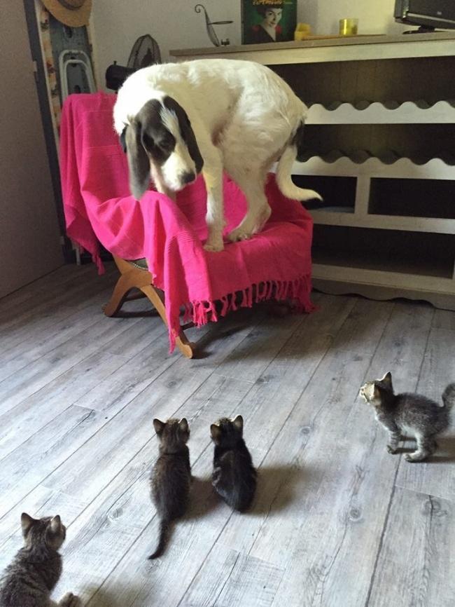 mačky páni (2)