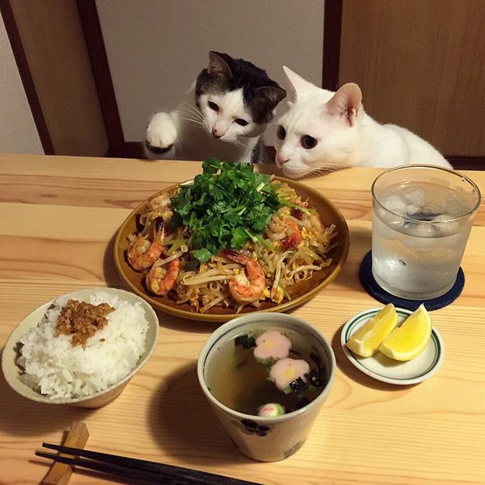 mačky sa prizerajú (11)