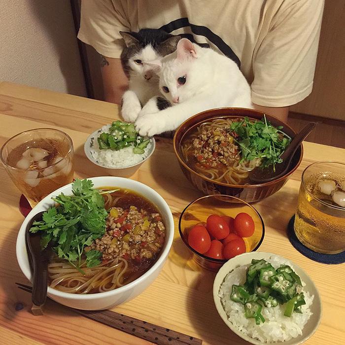 mačky sa prizerajú (2)