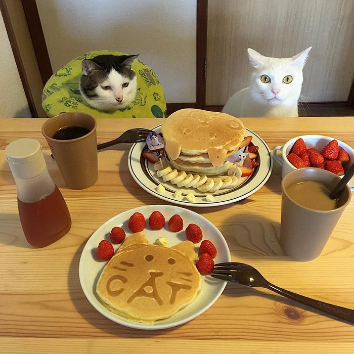 mačky sa prizerajú (7)