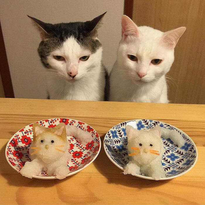 macky sa pozeraju (9)