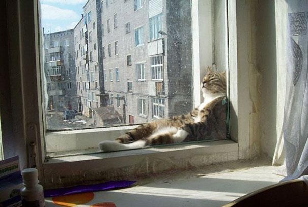 mačky milujú teplo (1)