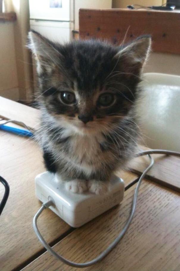 mačky milujú teplo (5)