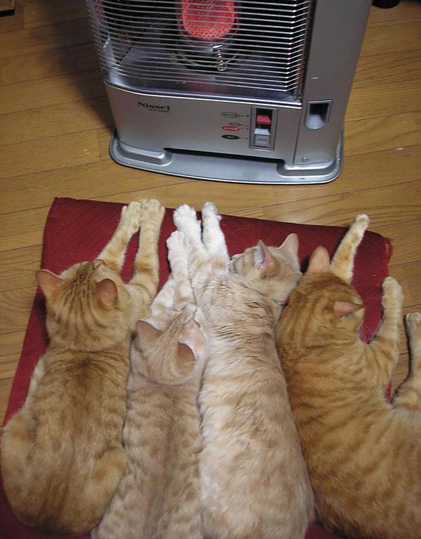 macky uzivajuce si teplo (8)