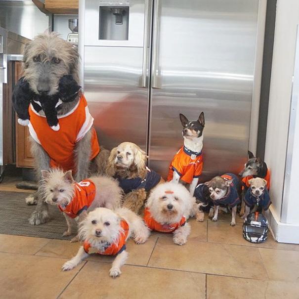 muz adoptoval stare psy (1)