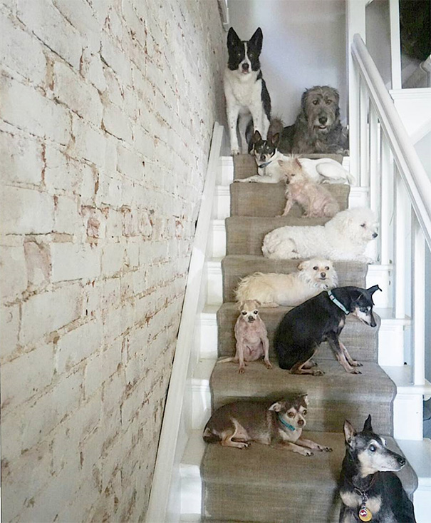 muz adoptoval stare psy (12)