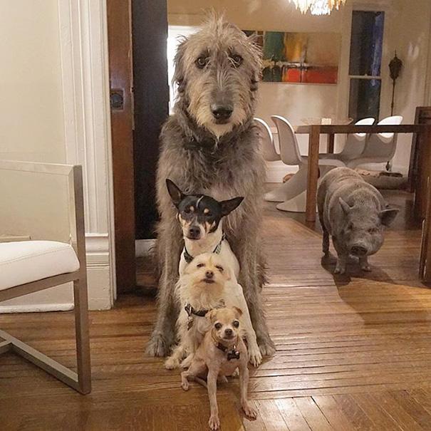muz adoptoval stare psy (4)