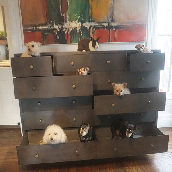 muz adoptoval stare psy (5)
