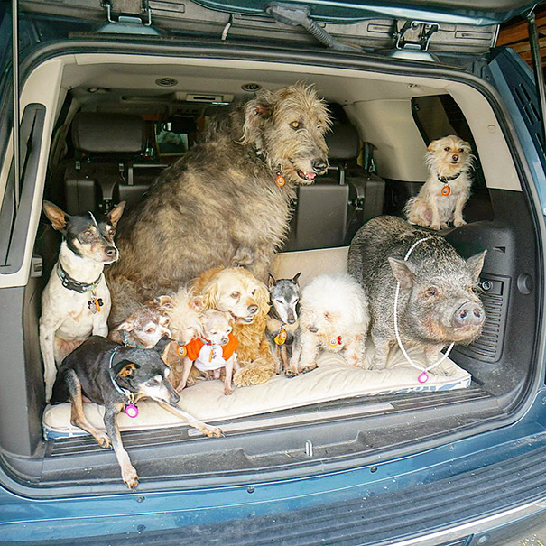 muz adoptoval stare psy (6)
