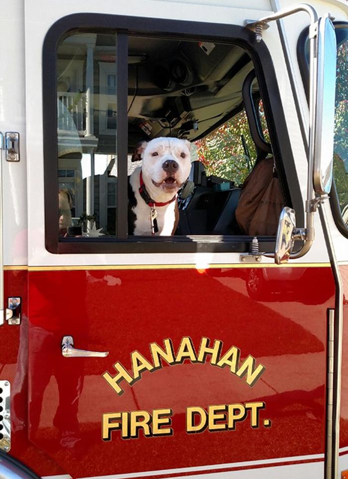 pes hasič (3)