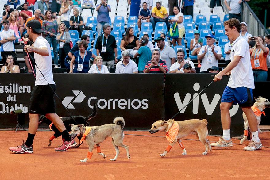 psy tenis (1)