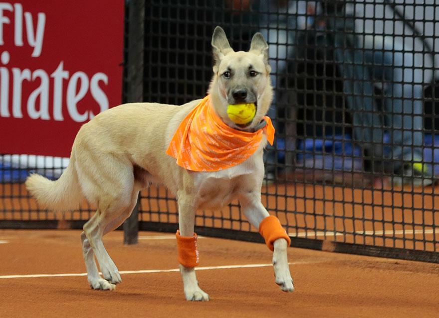 psy tenis (4)