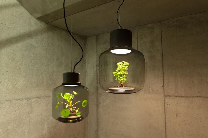 rastliny v lampach (1)