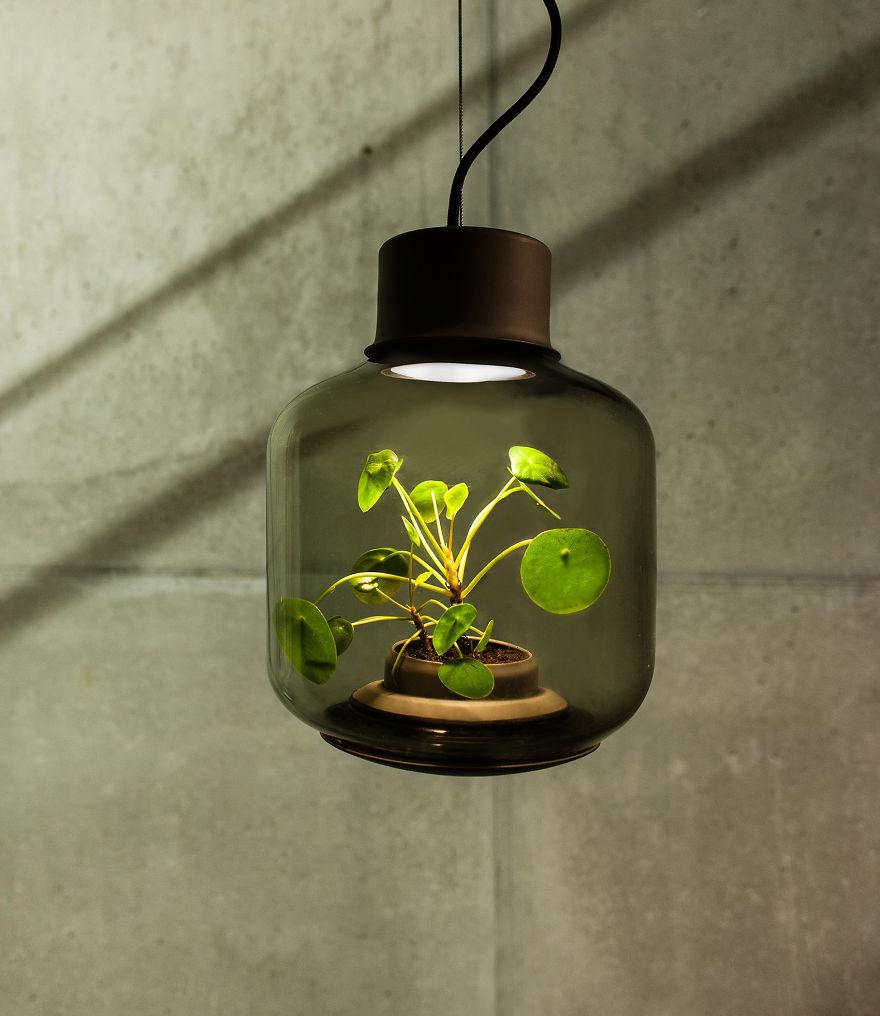 lampa s rastlinkou (2)