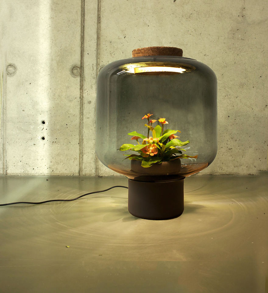 rastliny v lampach (3)