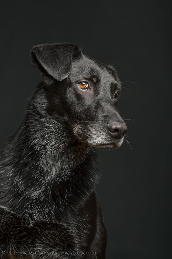 sudiace psy (4)