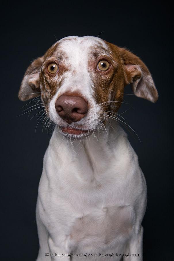 tváre psov (5)