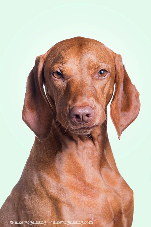 tváre psov (7)