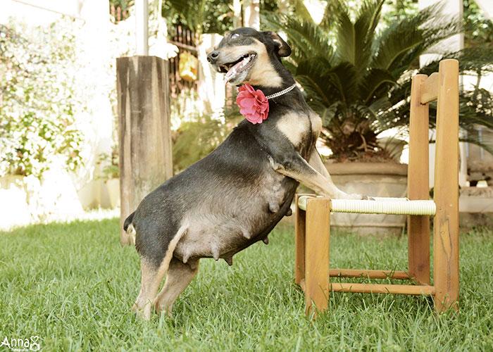 tehotný psík (1)