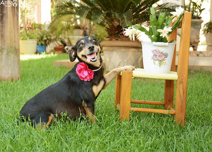 tehotny pes (2)