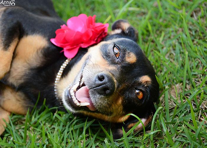 tehotny pes (8)