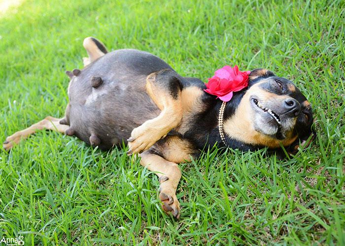 tehotný psík (9)