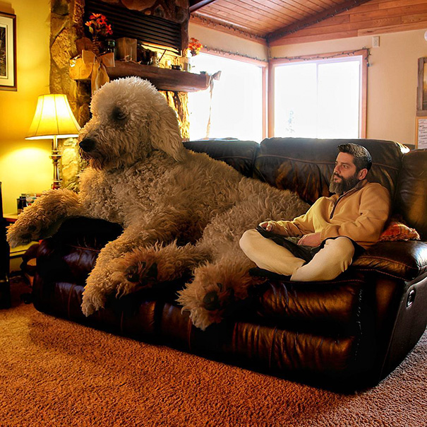 velky pes (1)