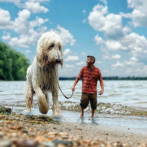 velky pes (10)