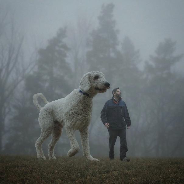velky pes (12)