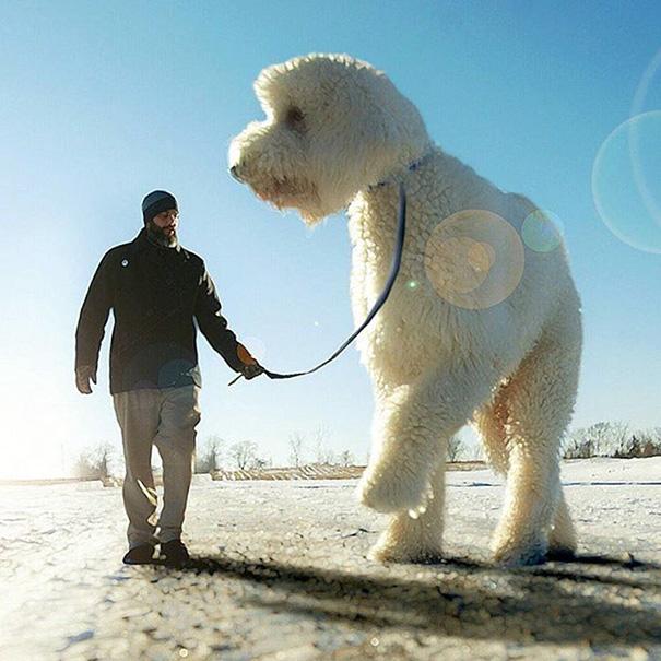 velky pes (14)