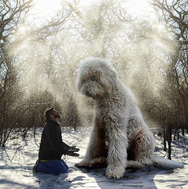 velky pes (4)