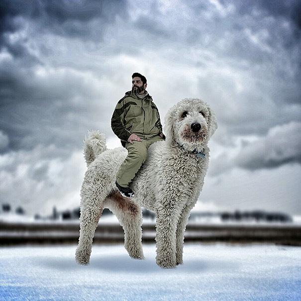 velky pes (7)