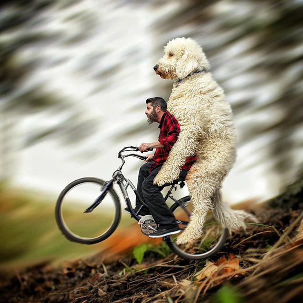 velky pes (8)